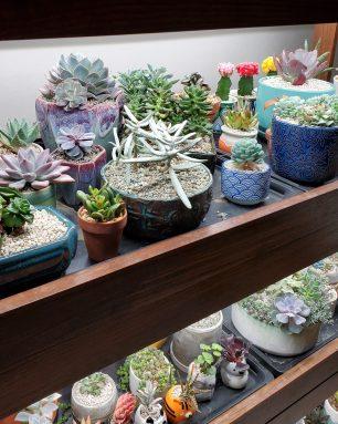grow lights succulents