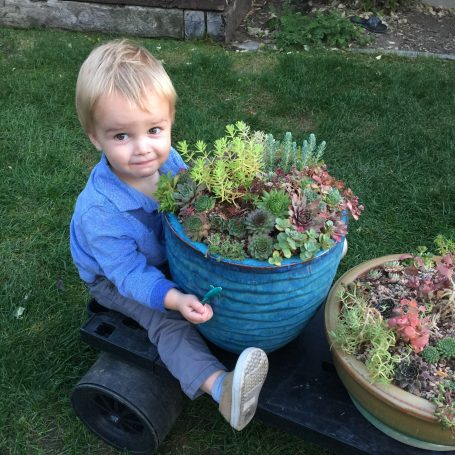 henry helping move succulents cart