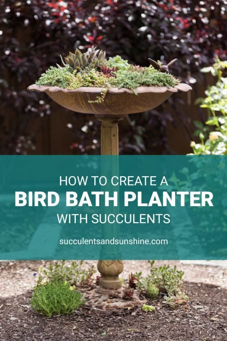 how to plant succulents in a bird bath planter sedums cold hardy