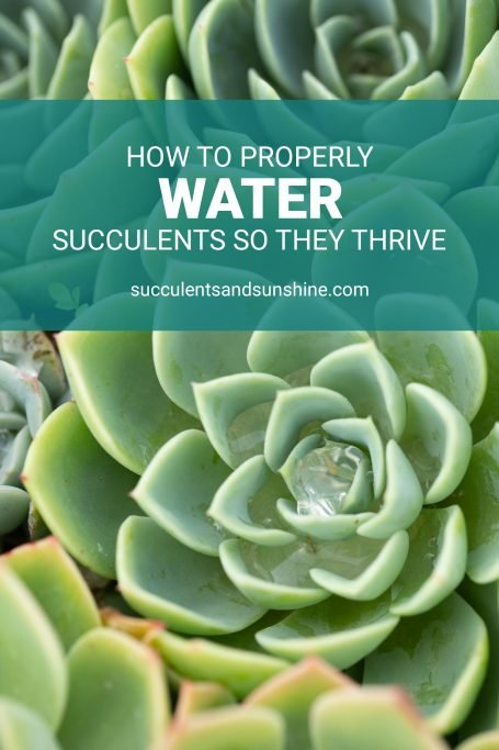 learn the watering method to keep succulents alive and thriving