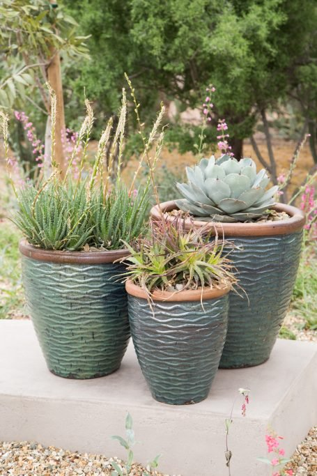 tips for watering outdoor succulents agave aloe