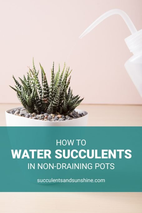 watering succulents non-draining pot prevent over watering squeeze bottle