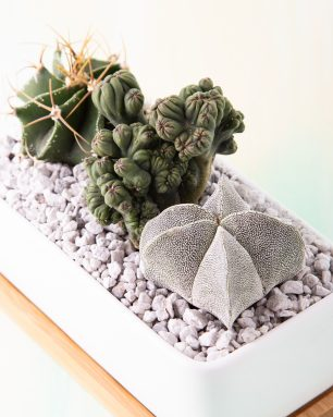 leaf and clay succulents