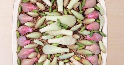 leaf propagation timeline