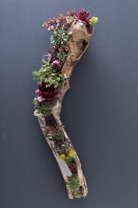 gorgeous driftwood succulent arrangement cold hardy