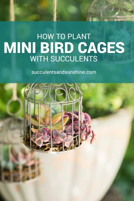 minibirdcages pinnable template
