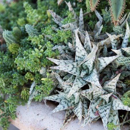stunning succulent arrangement tips monochromatic green white succulents