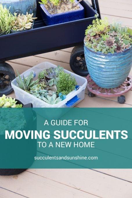 moving succulents long distances new home