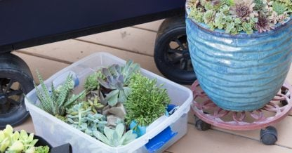 moving succulents planters bins