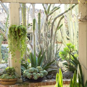 outdoor succulent garden sherman gardesn