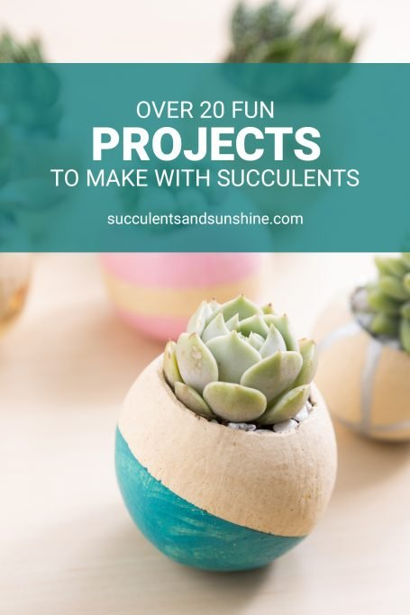 succulents in painted bell cups fun projects to make