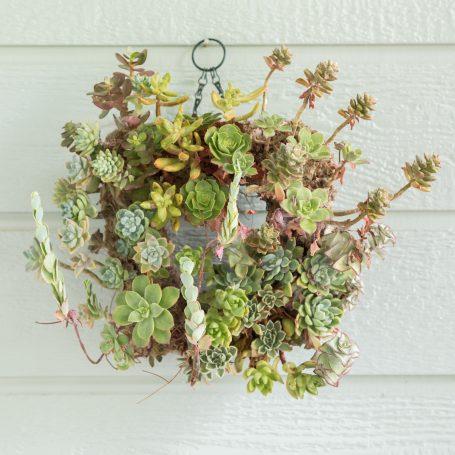 overgrown succulent wreath