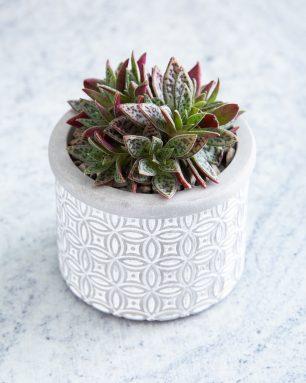 patterned concrete planter