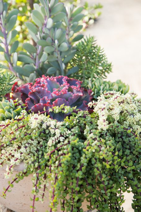 photography tips succulents