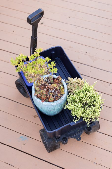plant trolly moving succulents