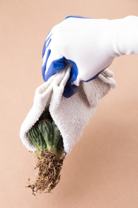 planting cacti with care