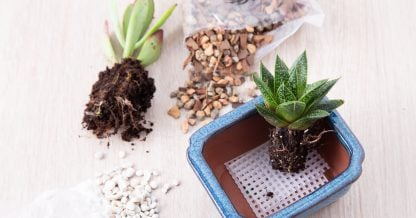 supplies for planting succulents