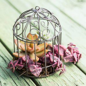 planting succulents birdcage