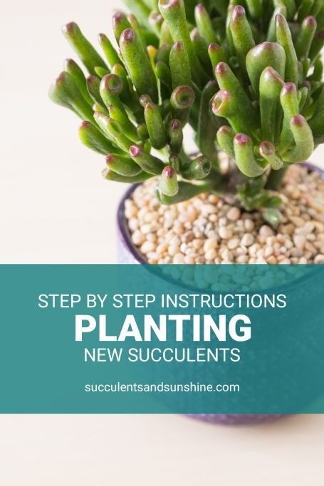 instructions for planting new succulents step by step tutorial gollum jade