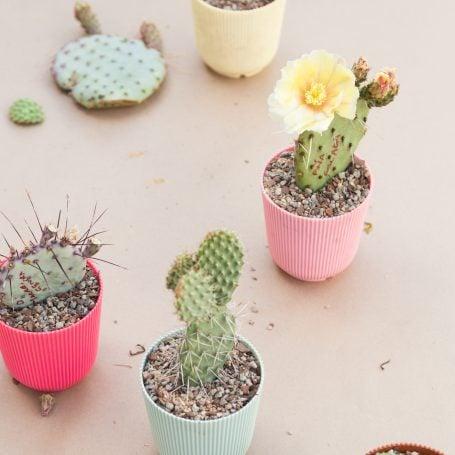 plastic pottery for succulents cactus pads propagation