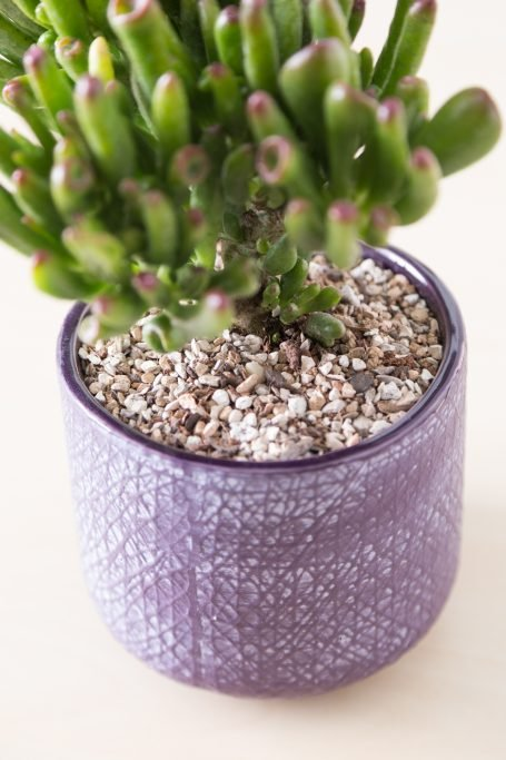 add soil over succulent roots planting tutorial