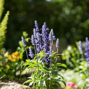 purple flowers succulent best light