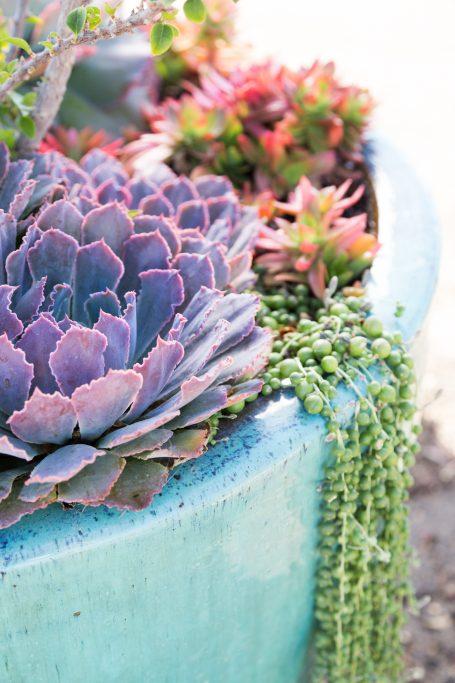 purple succulent blue planter tips photos