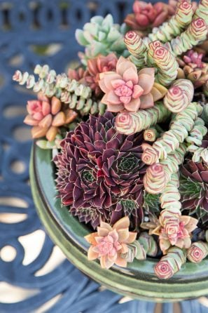 red green orange succulents potted