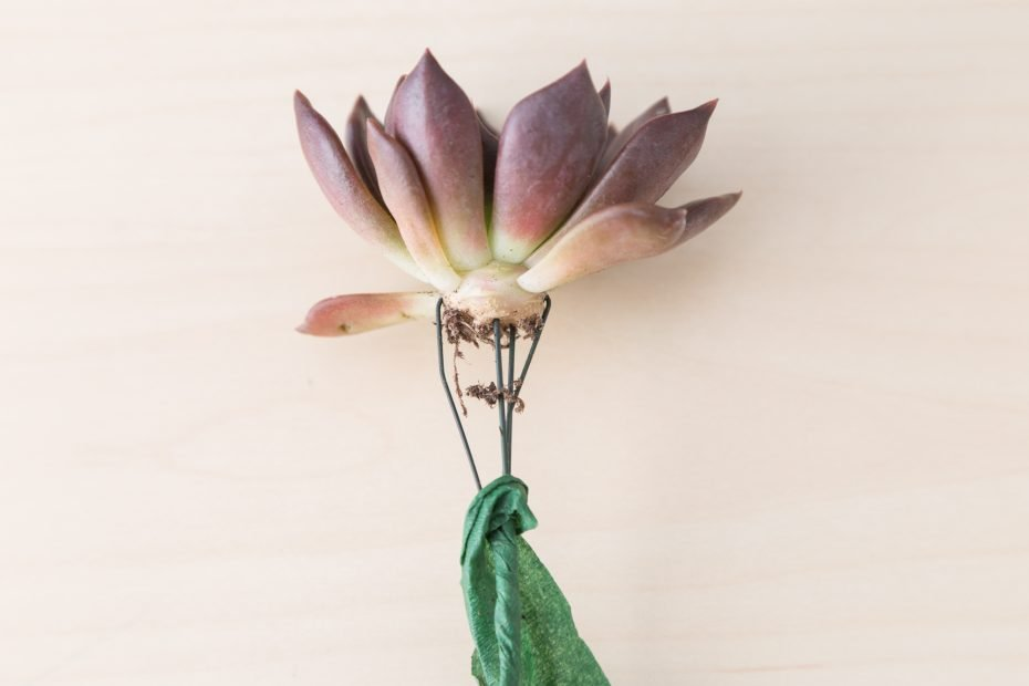 remove floral tape from wire on succulent cutting