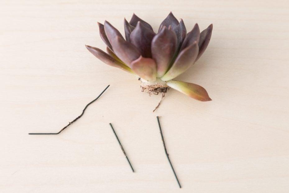 black knight succulent cutting floral succulent bouquet remove wire