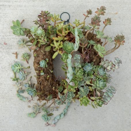 removing succulents from wreath