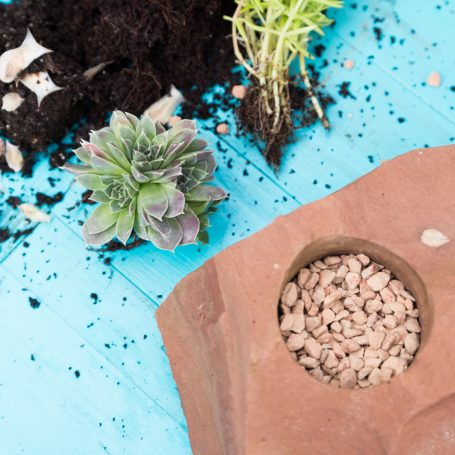 cold hardy succulents to plant in rock planter