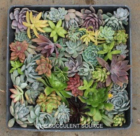 succulent cuttings wedding bouquet gifts