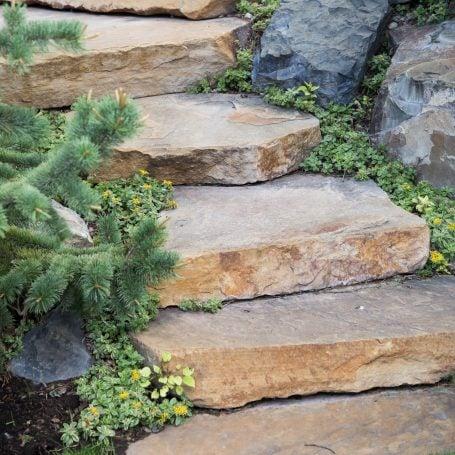sedums lining stone steps