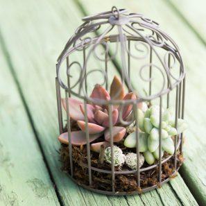 sedums planted mini birdcage