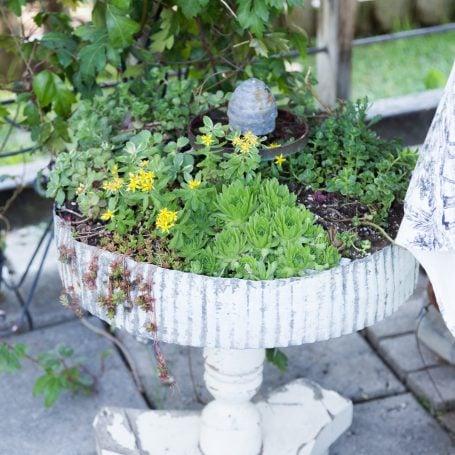 sedums sempervivums outdoor arrangement