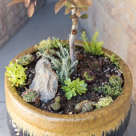 sempervivums mini succulent garden planter