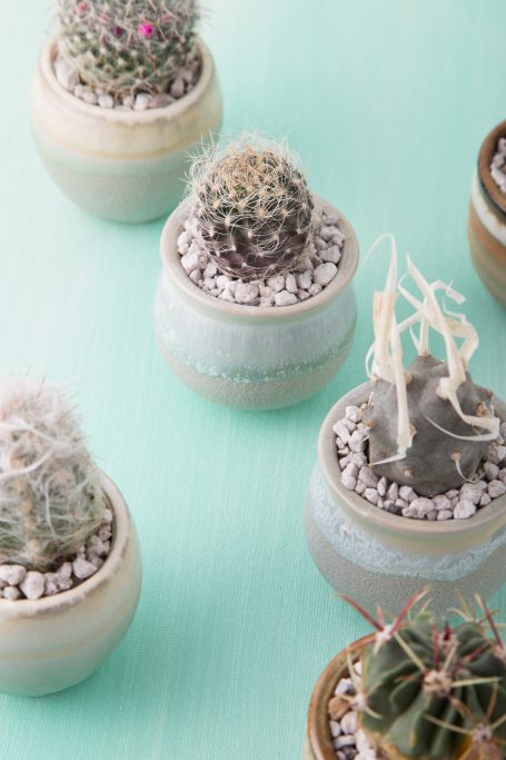 sharp cacti handle with care