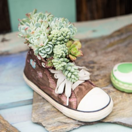 old shoe filled with blue succulents