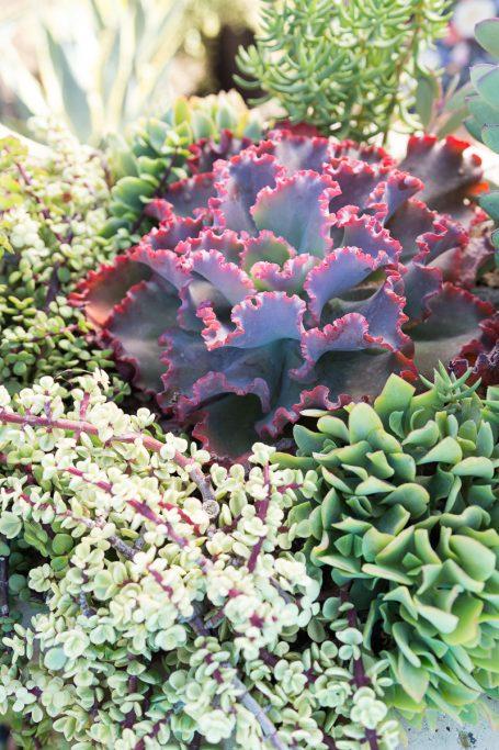 side back lit succulent photo tips
