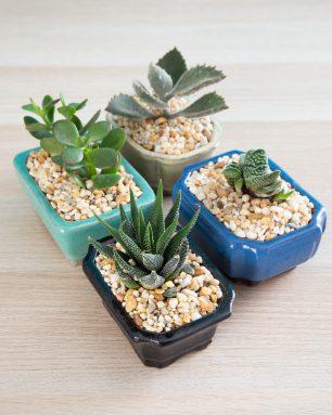 small bonsai style pots
