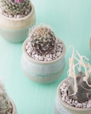 small potted cactus
