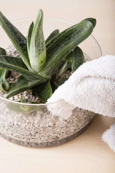 soaking excess water out of glass container gasteria marble watering tips