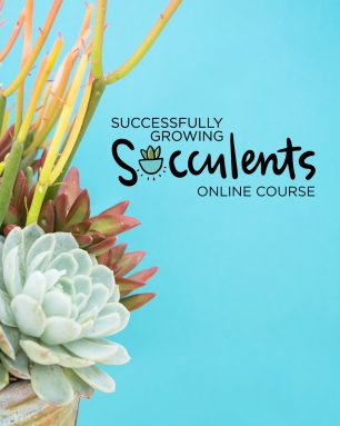 successfully growing succulents course
