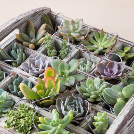 advent calendar using succulents in tiny pails
