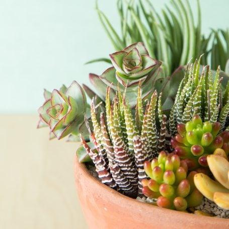 succulent arrangement terra cotta pot