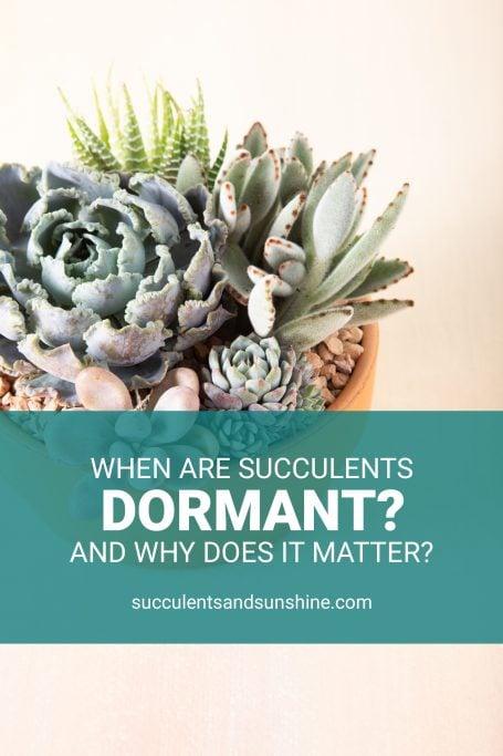 succulent arrangement dormancy
