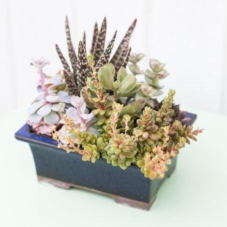 succulent arrangement for summer