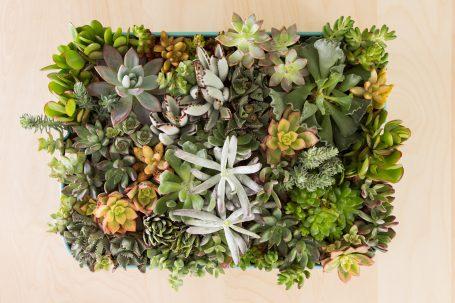 succulents in raskog ikea cart shelf