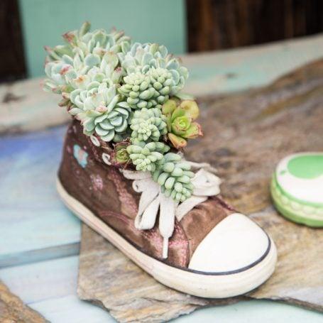 succulent arrangement shoe